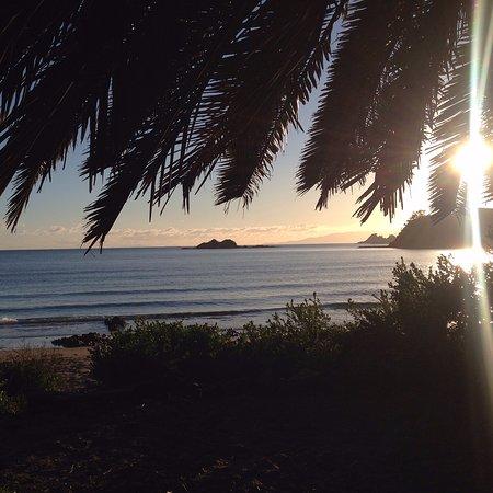 "Isla Waiheke, Nueva Zelanda: ""The Office"" Palm Beach"