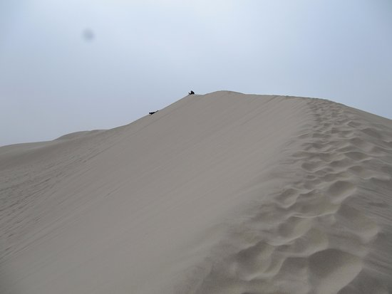 Florence, OR: Dunes at Jessie Honeyman Campground