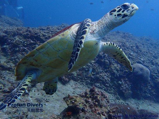 ProFun Divers