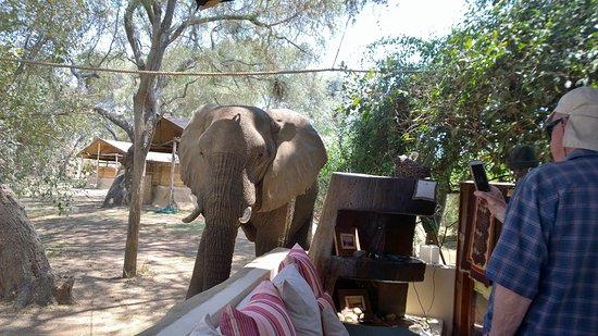 Chongwe River Camp: Elephant visitors to camp, daily !