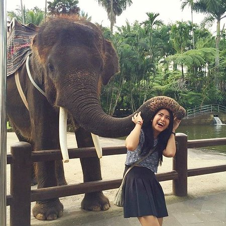Tegalalang, Indonesia: friendly elephant. got a hug from him