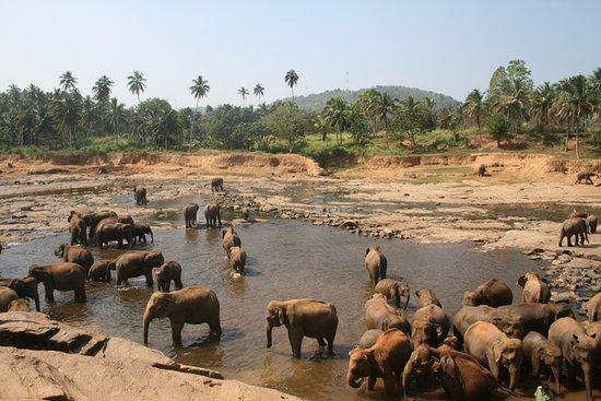 Pinnawala Elephant Orphanage: filleri balkondan izleme alanı