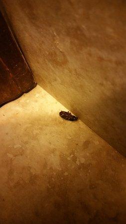 Griffin, GA: Cucaracha en el baño