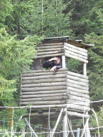 Harz National Park: Охотничья заимка