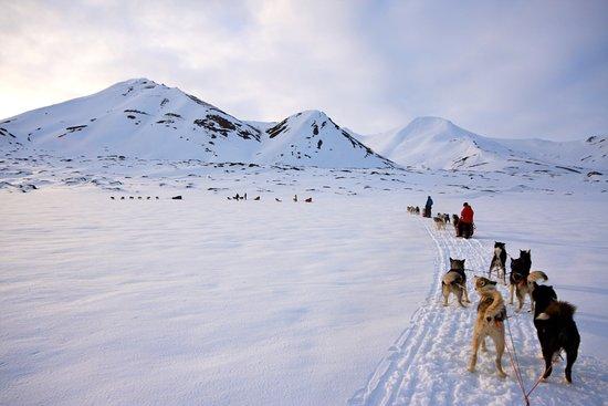 Svalbard Hotel: Dogsledding, husky, winter,
