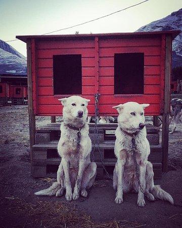 Troms, Norway: models