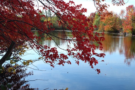 Caledon, Canada: Autumn leaves by the water