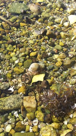 Fort Phoenix State Reservation: Some crabs in the beaches tide pools