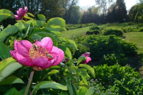 Jardin Botanique de la Presle