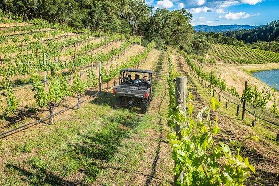 Luxury experience touring Calistoga vineyards