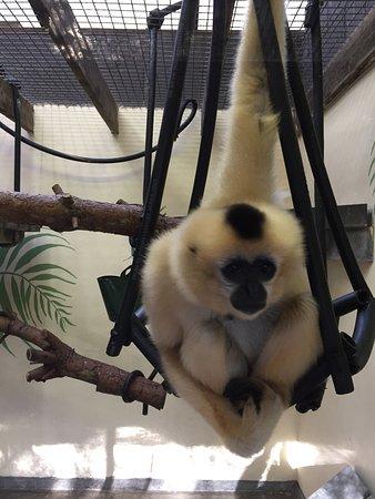 Monkey World: photo2.jpg