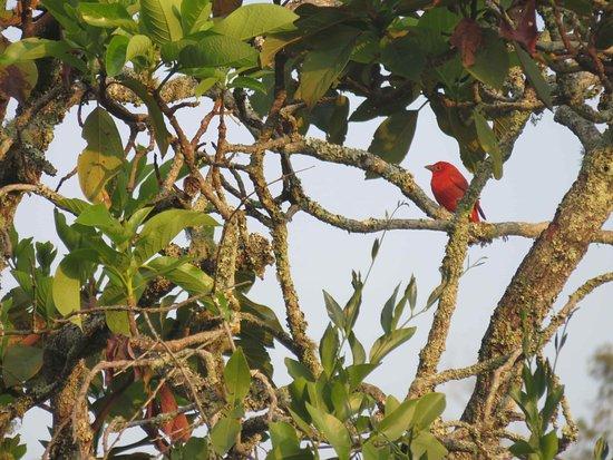 Departamento de Antioquia, Colômbia: Avistamiento de Aves