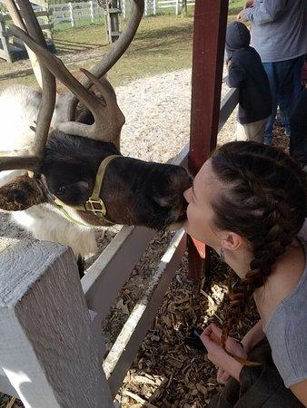 Rantoul, IL: Reindeer kisses