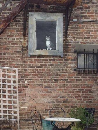 Schenectady, Estado de Nueva York: Painted cat in the courtyard.