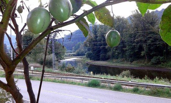 San Tirso de Candamo, España: El río Nalón a su manso paso por San Román
