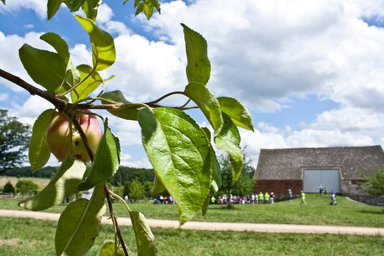 Gettysburg militære nasjonalpark: Apple trees on the Trostle farm.