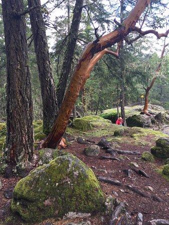 Little Qualicum Falls Provincial Park: photo7.jpg