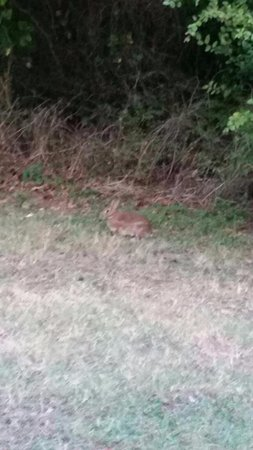 Loyd Park: One of many rabbits that come out just before dark