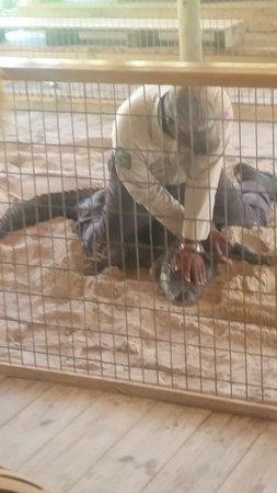 Gator Park: Gator wrestling