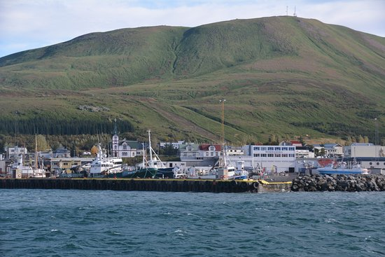 Whale watching tour in Husavik