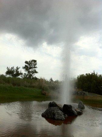 Old Faithful Geyser of California: The geyser