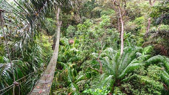 San Carlos, Nicaragua: LRM_EXPORT_20161105_113446_large.jpg