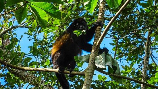 San Carlos, Nicaragua: LRM_EXPORT_20161105_185249_large.jpg