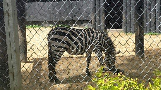 York's Wild Kingdom Zoo and Fun Park : A zebra