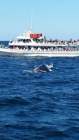 Cape Ann Whale Watch: The creast of a whale