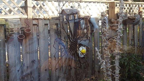 Innisfil, Canada: Blue Jay