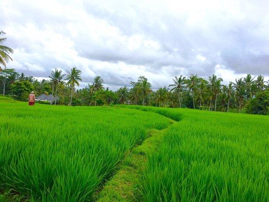 Agus Bali Private Tours: Bali's beautiful scenery