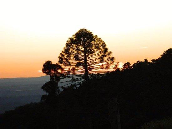 Bunya Mountains Accommodation照片