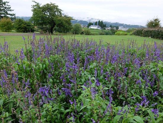 松川村, 長野県, ブルーサルビアは満開を過ぎていたが清々しい公園