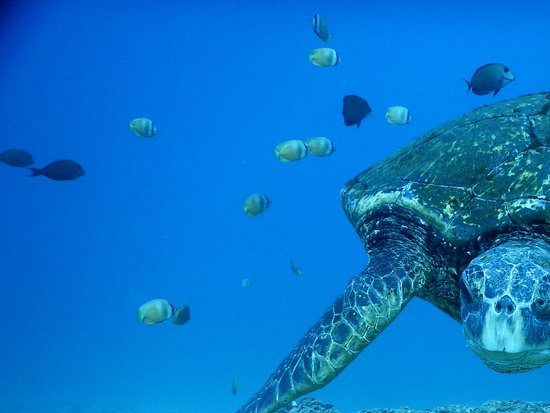 Ed Robinson's Diving Adventures: The ninja turtle