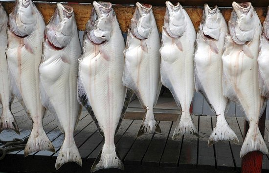Fat Fish Charters