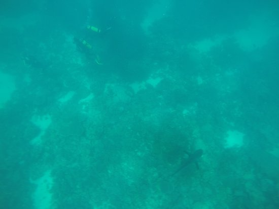 Picture of ningaloo reef dive coral bay tripadvisor - Ningaloo reef dive ...