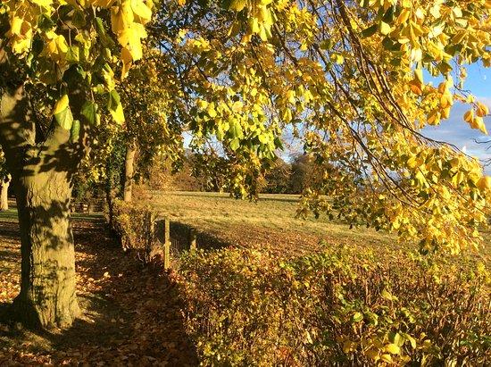 Walworth, UK: Autumn colours in Garden