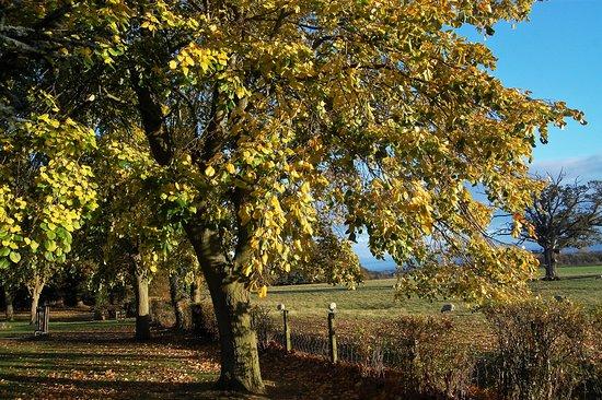 Walworth, UK: Beautifully Maintained Gardens