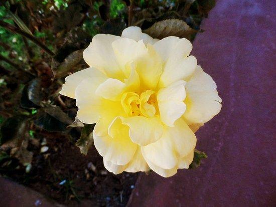 Imperial Cusco Hotel: Flor no jardim do hotel