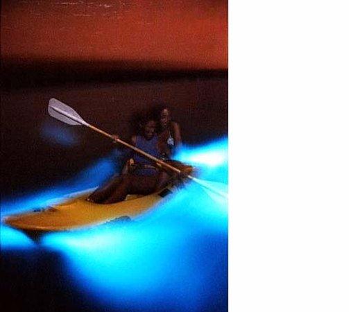 A1a Beach Als Bioluminescence Kayak Al Cocoa Orlando Melbourne