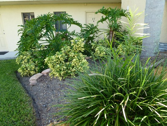 Lehigh Acres, FL: Landscaping by our apartment door, the laundry room is also there.