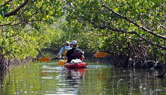 A1a Beach Als Cocoa Kayak Mangrove Tour Thousand Islands Manatees And Dolphins