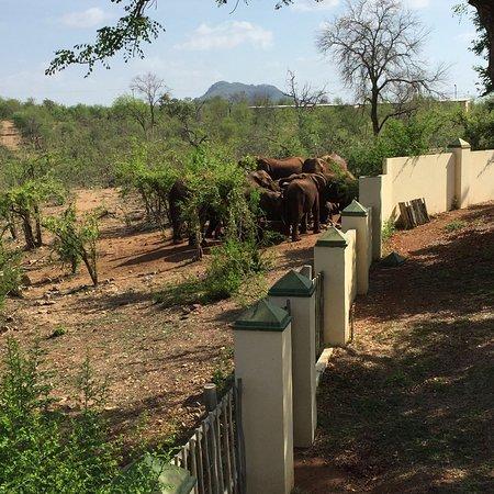 Muweti Bush Lodge: photo2.jpg