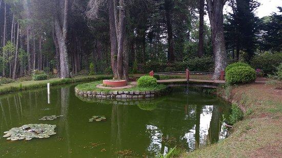 Resultado de imagem para pequeno lago