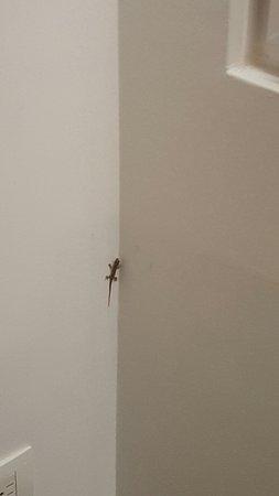 NH Collection Royal Medellin: una lagartija en la pared de la habitación.Totalmente inofensiva