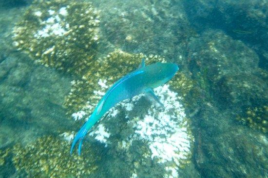Drake Bay, Kosta Rika: fish at Cano Island