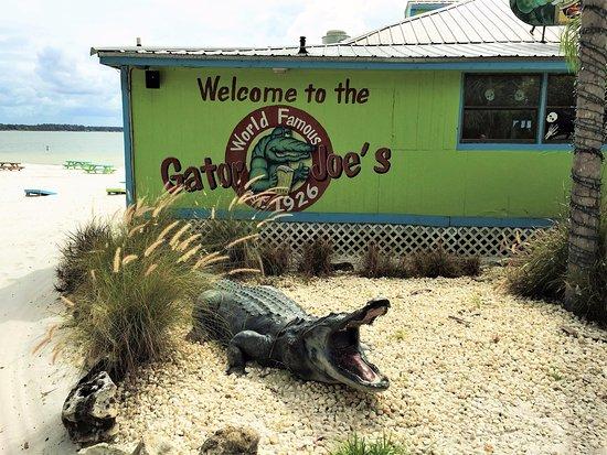 Ocklawaha, FL: Gator Joe lives!