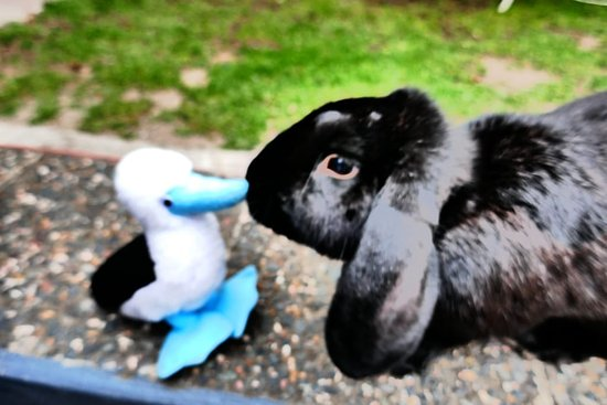 Hostal de La Rabida: Bluebie the Booby meets Brownie the Bunny