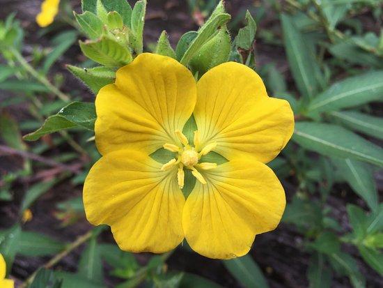 Ocklawaha, FL: wild flowers