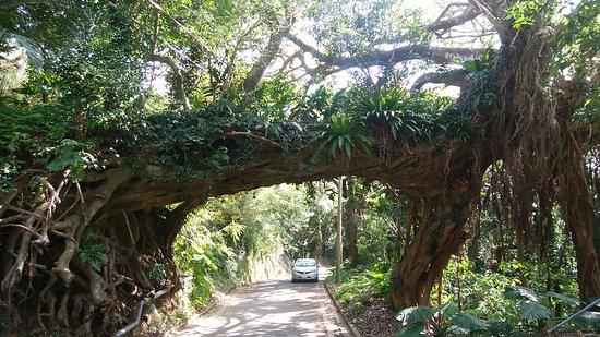 the banyan tree Siesta key accommodations at siesta key banyan resort offers accommodations and rentals on siesta key florida.